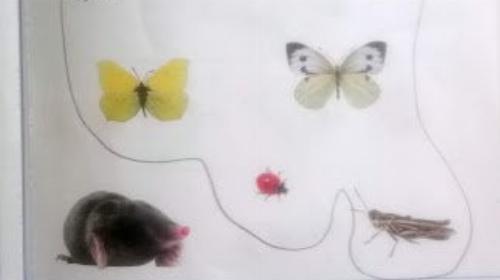 Obrazek galerii gr. VI na łące